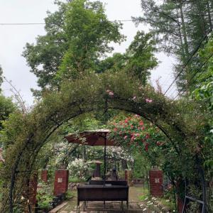 今朝の庭より〜小雨の天気