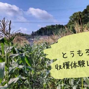 JA市原市「とうもろこし収穫祭」で収穫体験!