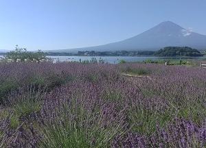 大石公園と富士山 夏