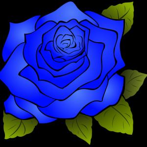 青い薔薇?