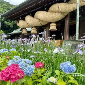 【光の道で知られる宮地嶽神社】は菖蒲の季節の散策がおすすめ!