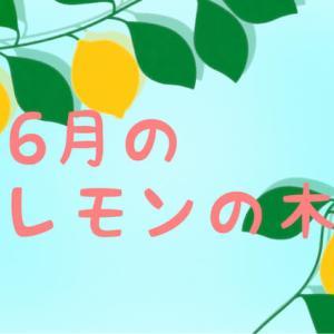 【6月のレモンの木】青虫退治や肥料やり、新芽などの成長記録