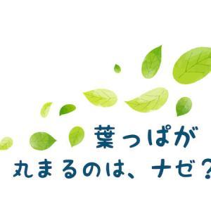何かの病気!?【レモンの木の葉っぱが丸まる現象】3つの原因と対策まとめ
