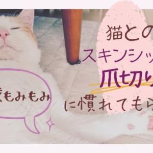 肉球もみもみ♡猫とのスキンシップで爪切りに慣れてもらおう!