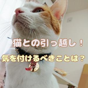 猫と初めての引っ越し!気を付けるべきことは?