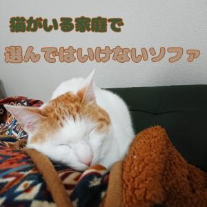 猫がいる家庭のソファ事情!選んではいけないソファとは?