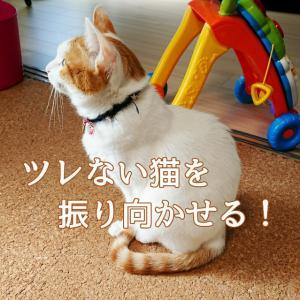 ツレない猫を振り向かせる!3大裏ワザ教えます