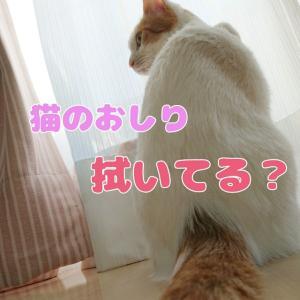 猫のおしり、拭いてる?