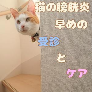 猫の膀胱炎 早めの受診とケア!
