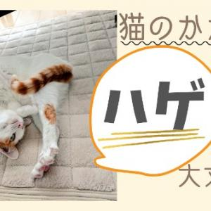 猫のかかとハゲ!!大丈夫?!