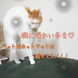 猫に暖かい冬を♡ペット用ホットマットは超おすすめ!