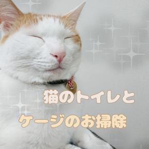 月に一度できれいに!猫のトイレとケージのお掃除