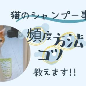 【猫のシャンプー事情】頻度や方法は?コツ☆教えます!