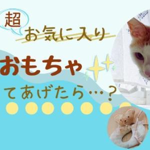 猫のお気に入りのおもちゃ洗濯してあげたら……?
