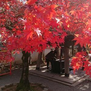 紅葉を楽しめる季節になってきましたね(^O^)/