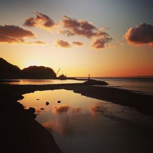 西伊豆で夕陽を楽しみながら♪河津桜の花に照らされた夕陽色も魅力♪