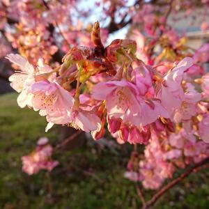 春の装いを初めて\(^o^)/春爛漫♪