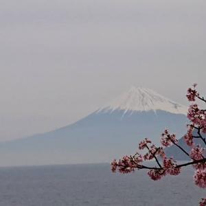 西伊豆から見る富士山も魅力だなぁ~(^^♪