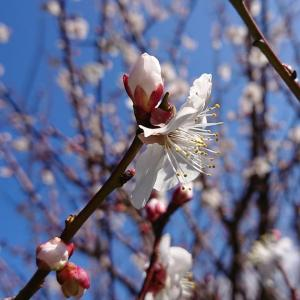 春を見つけた٩( ''ω'' )و