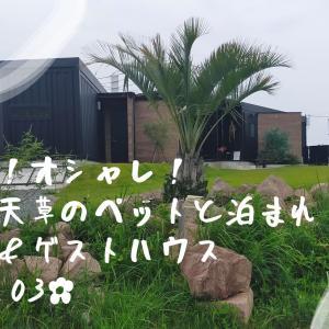 超絶景!✿Tres.03✿熊本上天草のペットと泊まれるオシャレなカフェ&ゲストハウスをご紹介(ドッグラン付)