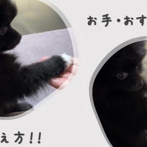 ☆犬のしつけ☆おすわりとお手の教え方をご紹介!(動画付き)