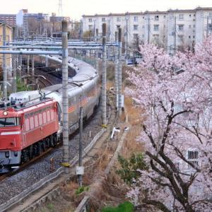 [桜咲く沿線]EF81-81牽引カシオペア紀行