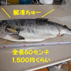 思わぬところで手に入れた銀鮭