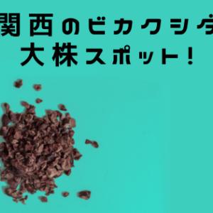 関西でビカクシダの大株見たい人は、兵庫県立フラワーセンターに行くべし!!