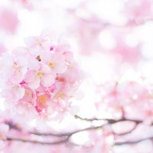 桜の季節は命を感じる季節。来年の今ころに想いを馳せています