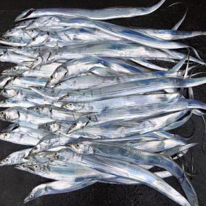タチウオの釣り方 ショアジギング