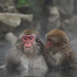 週末は温泉でゆったり、体を労わりつつ