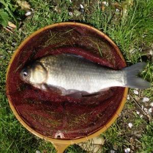 【川・湖沼】野釣りでのヘラブナ釣り入門