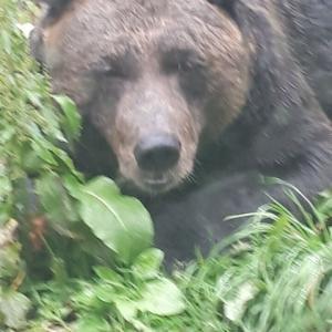 熊と「有楽町(帯広)」のジンギスカン