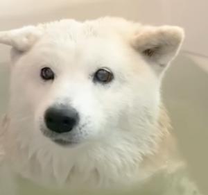 『お風呂に大人しく入る犬も可愛いな』と思ったこと。。。