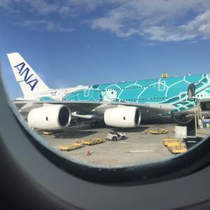 成田空港でフライングホヌがカメのせいで飛べなかった〜