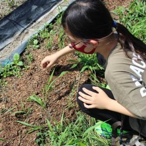 ASOVIVA!の皆さんが京谷農園に来園されました