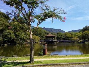 久しぶりに奈良公園周辺を散歩。
