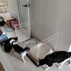 我が家の子猫日記(前日~2日目)