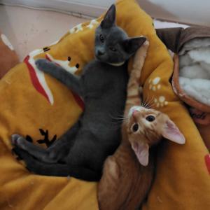 我が家の子猫日記(15日目~20日目)