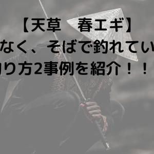 【天草 春エギ】私ではなく、そばで釣れていた人の釣り方2事例を紹介!!