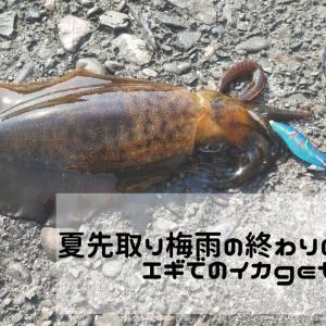 【2021 牛深エギング】梅雨の終わりに富岡漁港でエギ 2.5号でイカgetした話!!