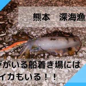 【深海漁港 アジング&エギング】アジがいる船着き場にはイカもいる!!