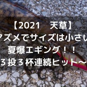 【2021 天草】朝マズメでサイズは小さいが夏爆エギング!!~3投3連続ヒット~