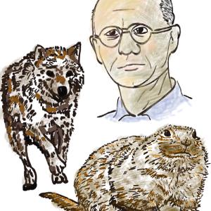 北極ギツネと旅ネズミの関係に着目 「食物連鎖」を提唱した動物生態学者