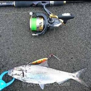【釣果速報】大磯の堤防とサーフおすすめの釣りポイント