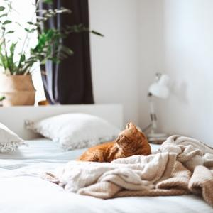 【ミニマリストの疑問】ベッドはいらない?その必要性についての個人的な考えとか