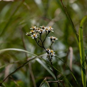 深入山の花々・二