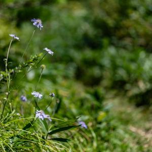 道後山と岩樋山k¥の花々・三