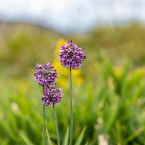 比婆山の秋の花・二