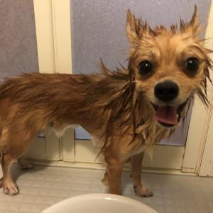 やっぱり水が大嫌いのきぃ太、浴槽から自力で脱出🤣